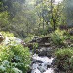 Plantación de Café ancestral en Bosque